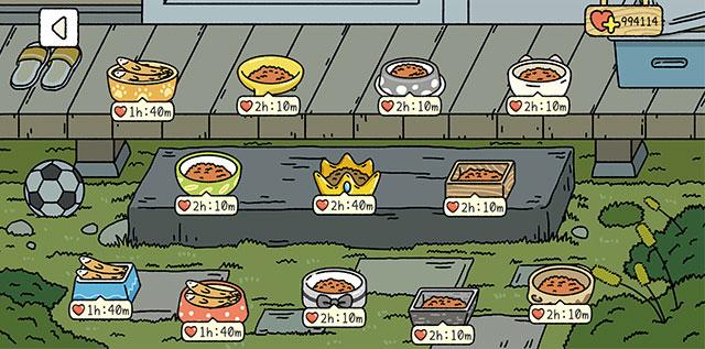 Cho mèo ăn
